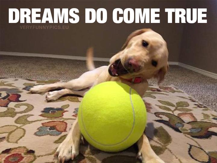 Dog with big tennis ball - Dreams do come true