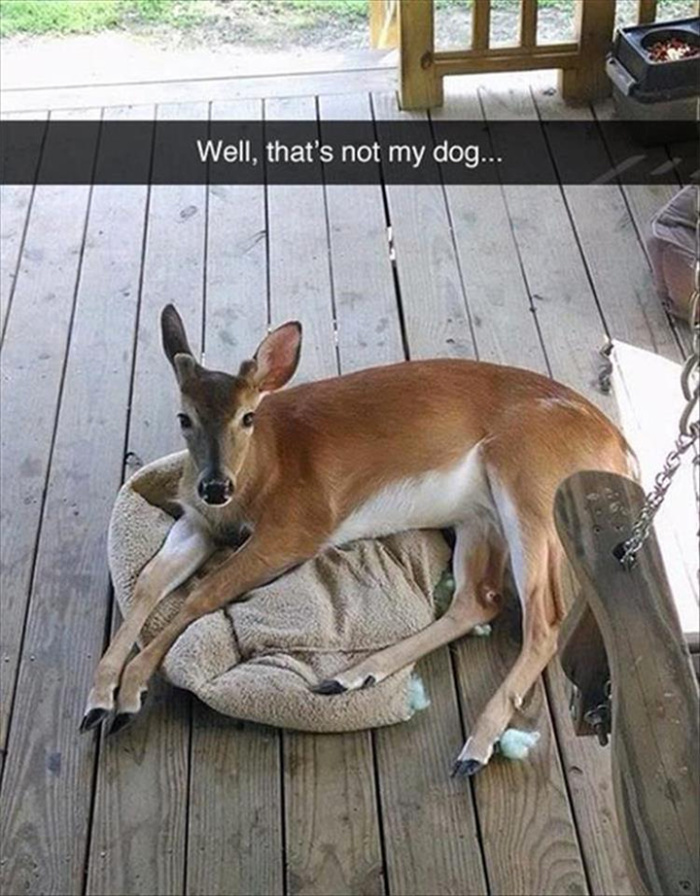 Oh deer, you're not fooling me