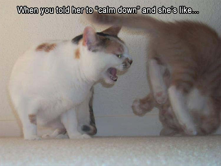 Angry cat - Telling someone to calm down