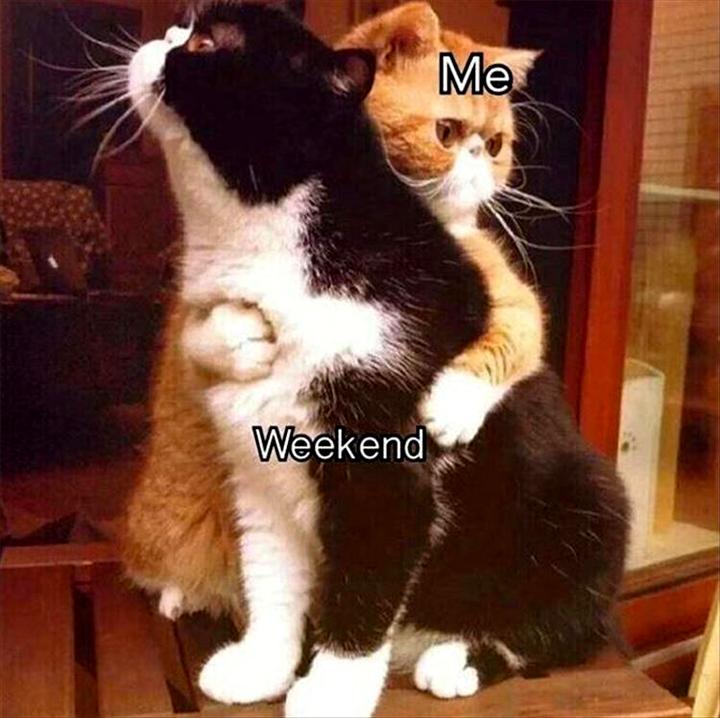 Cats hugging - Weekend VS Me
