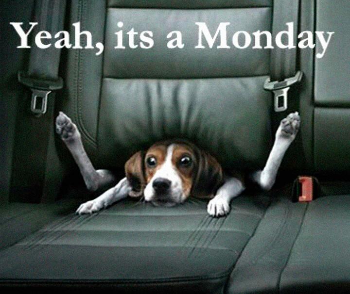 Dog stuck between car seats - Yeah, it's a monday
