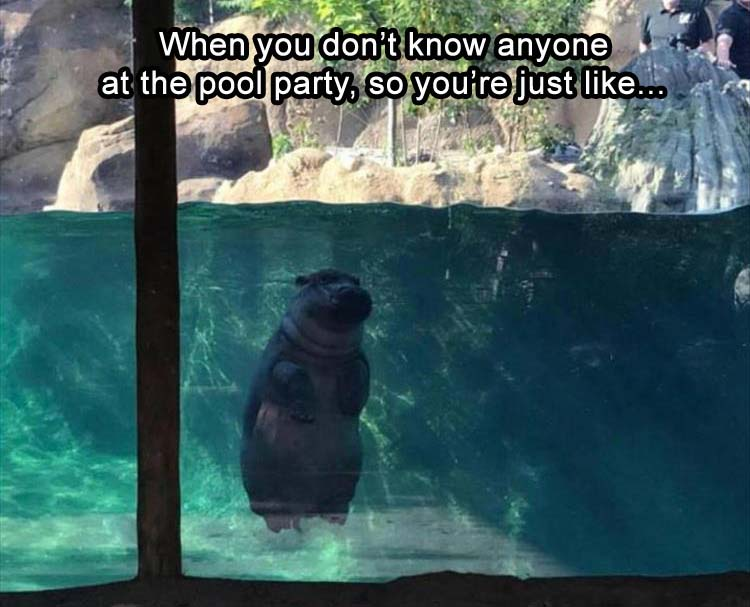 Hippo sitting at the bottom of a pool