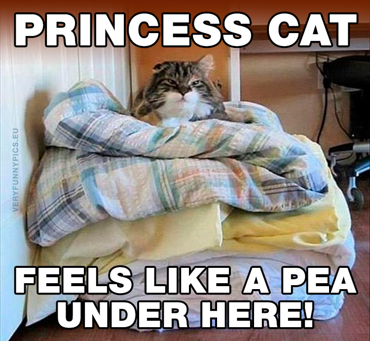 Cat on a pile of pillows - Princess cat - Feels like a pea under here
