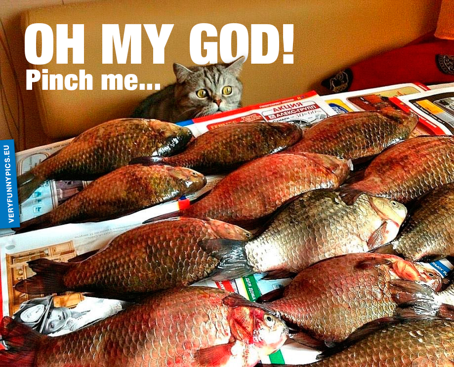 Cat looking at fish - Oh my god! Pinch me...