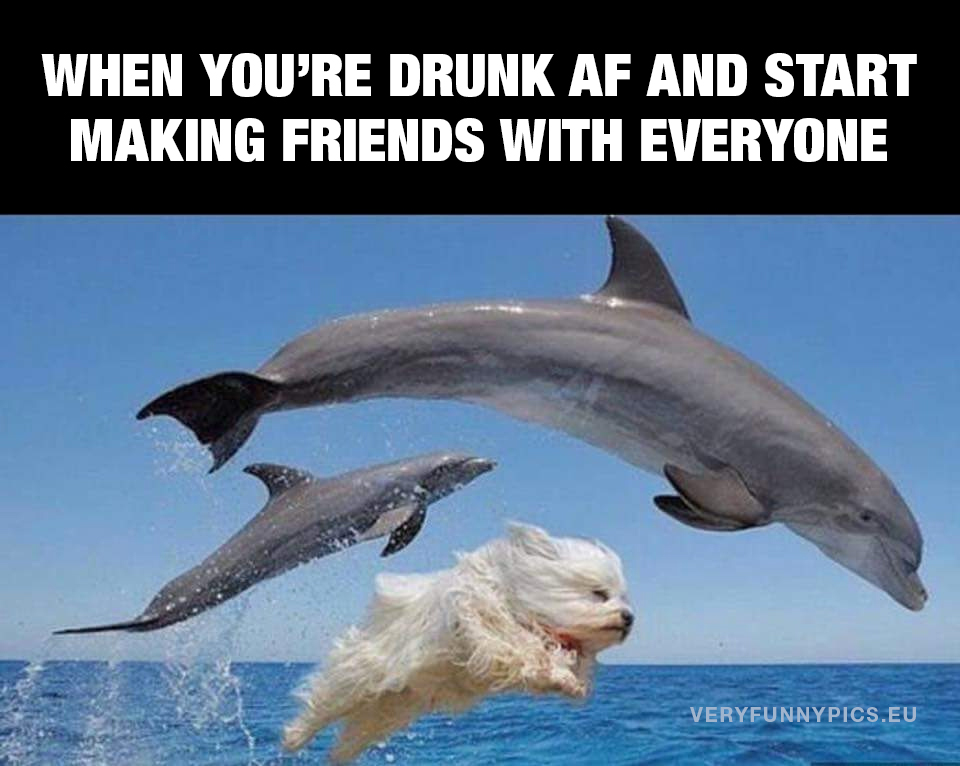 Dog jumping with dolphins - When you're drunk af and start making friends with everyone