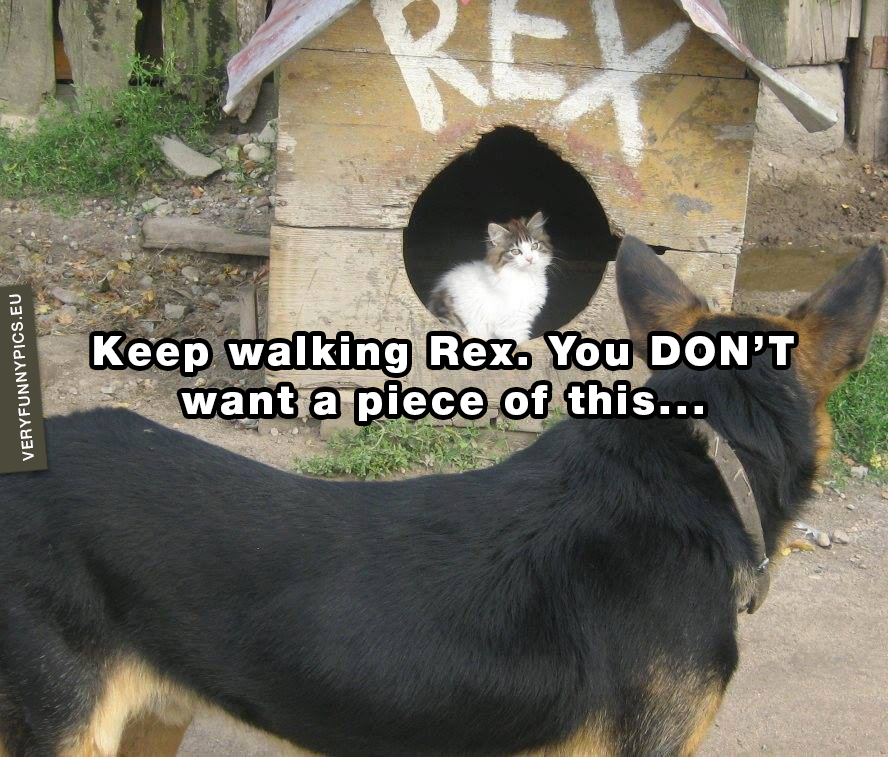 Cat in dog house - Keep walking Rex. You DON'T want a piece of this...