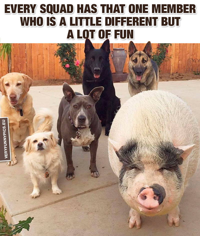 Five dogs and a pig