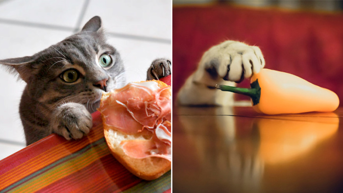 25 super cute pictures that proves that cats are master thieves!
