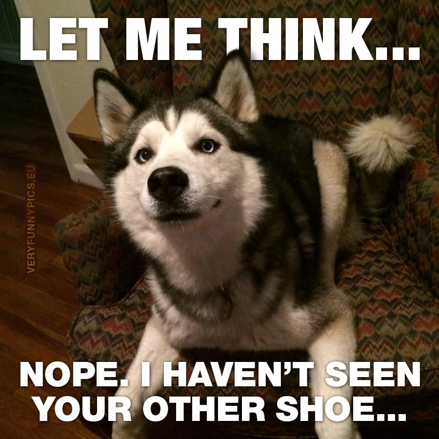 Innocent looking dog
