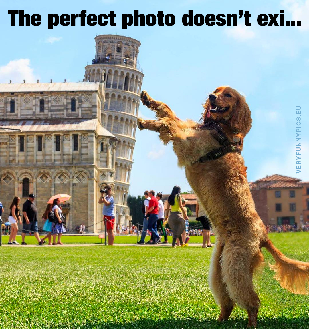Dog holding up the leaning tower of Pisa