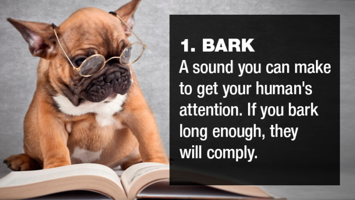 23 words from the dog's dictionary that explains a lot of their behavior