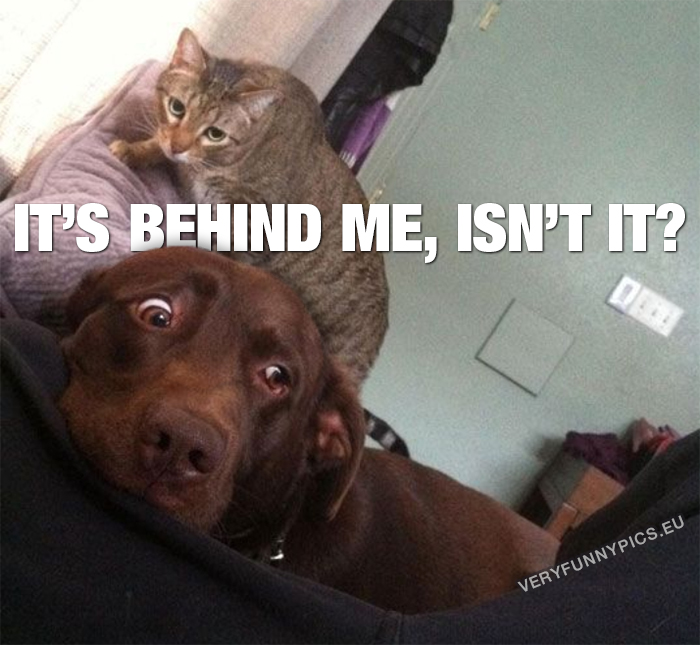 Scared dog with cat behind it's back