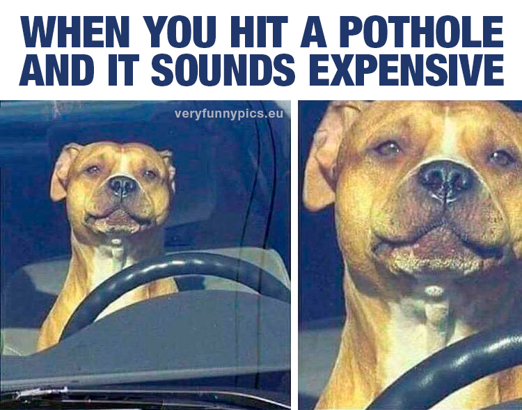 Dog behind wheel in car
