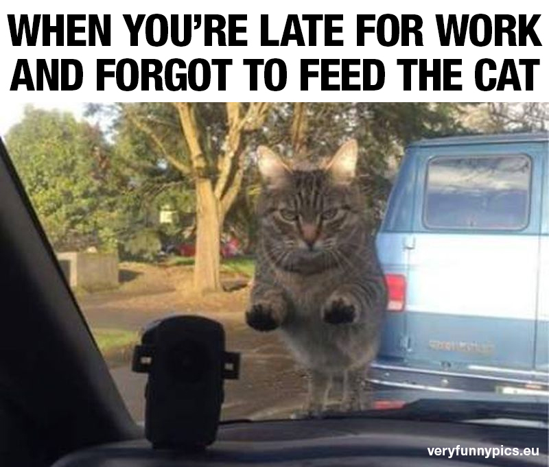 Angry cat looking through front window of car