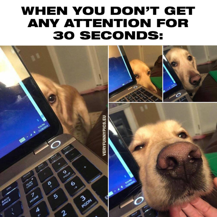 Every dog owner knows the struggle (and the joy)