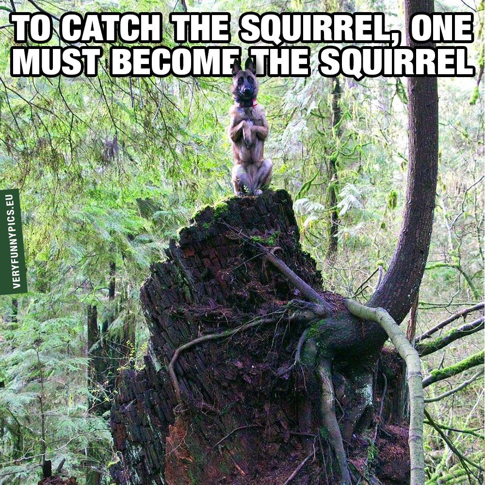 Dog sitting like a squirrel