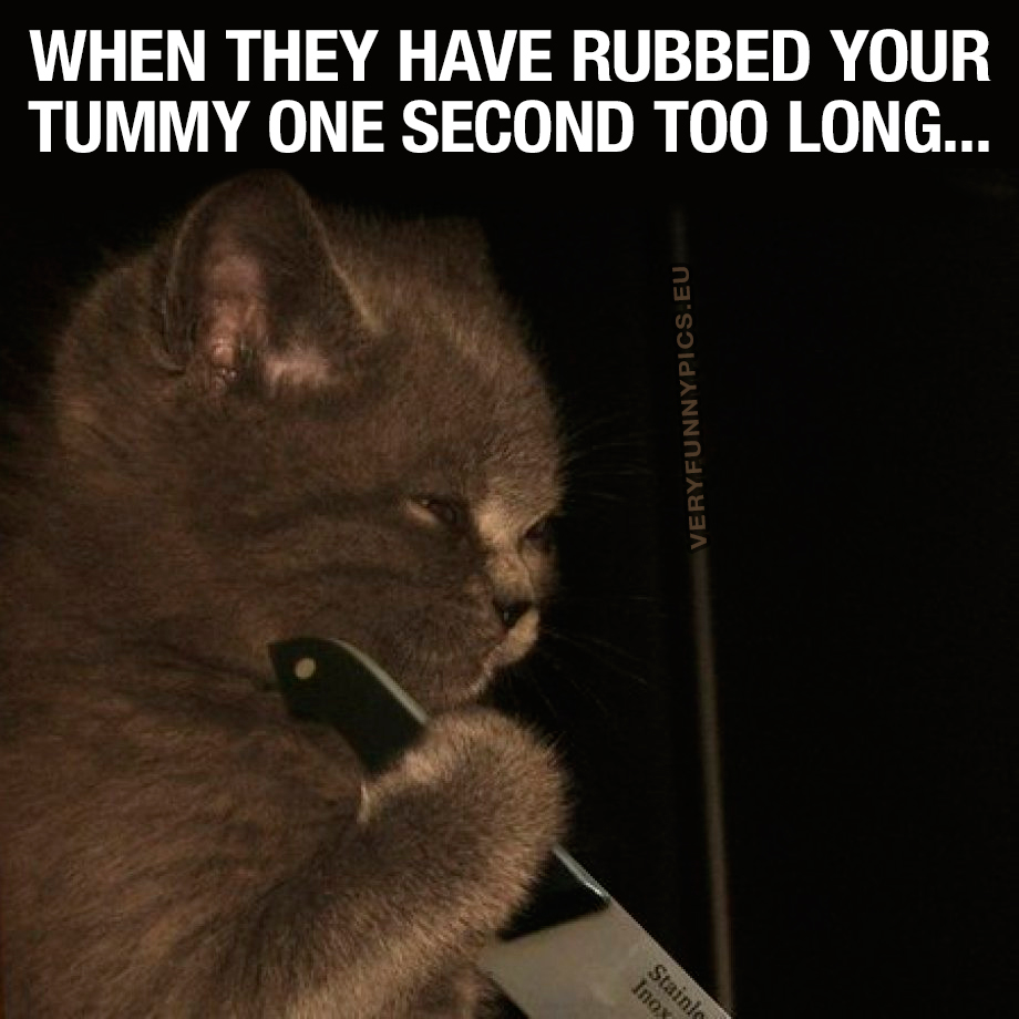 Cat with a knife