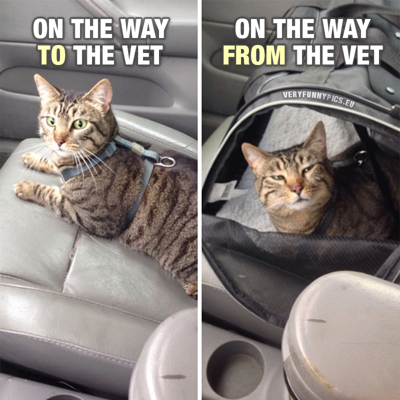 Cat in front seat of car - On the way to the vet VS On the way from the vet