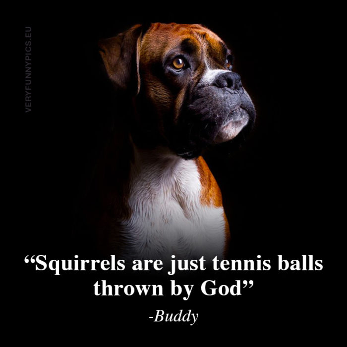 Wise words from Buddy the dog