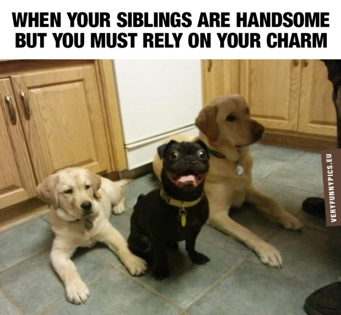 That charming sibling