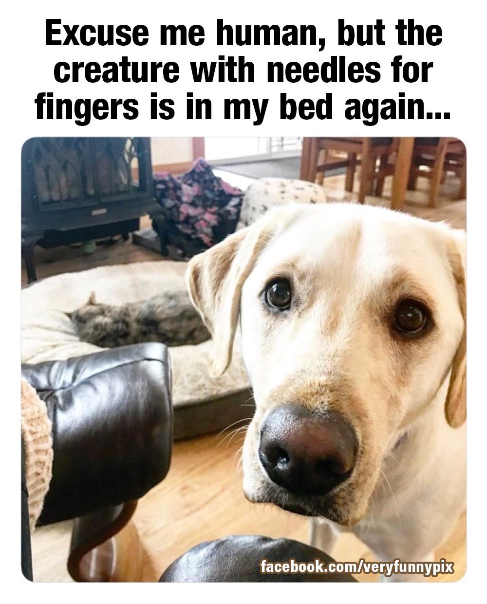 Dog with pleading eyes
