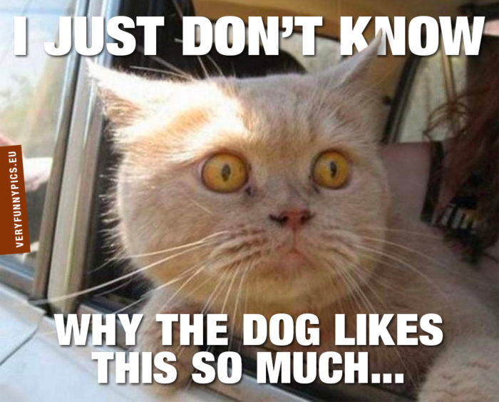 Cats and dogs will never understand each other