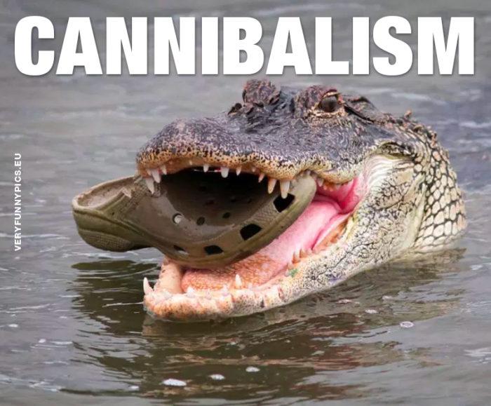 Nature can be cruel…