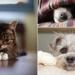 What could be better than funny pictures with cute dogs and cats? Nothing, according to us!