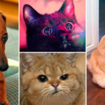 Ten funny animal pictures that you probably can relate to!
