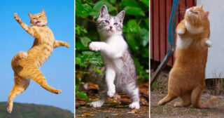 Twenty funny pictures to prove that cats are masters of dance!