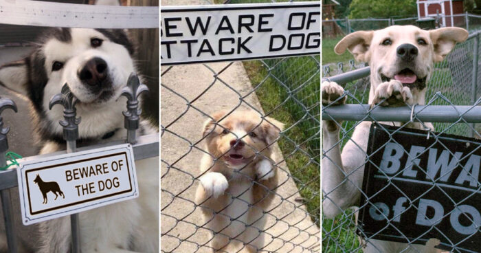 "Fourteen images of ""dangerous"" dogs behind their warning signs"