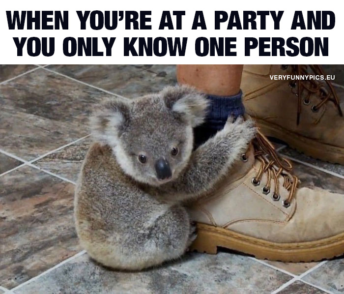 Koala bear clings to shoe