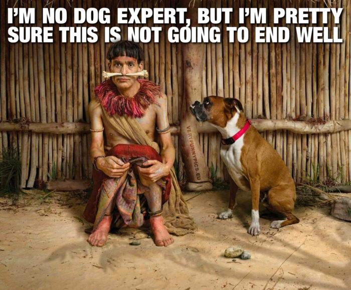 I'm no dog expert…