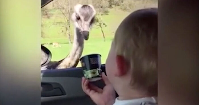 This baby meets an ostrich and his reaction will definitely make your day!