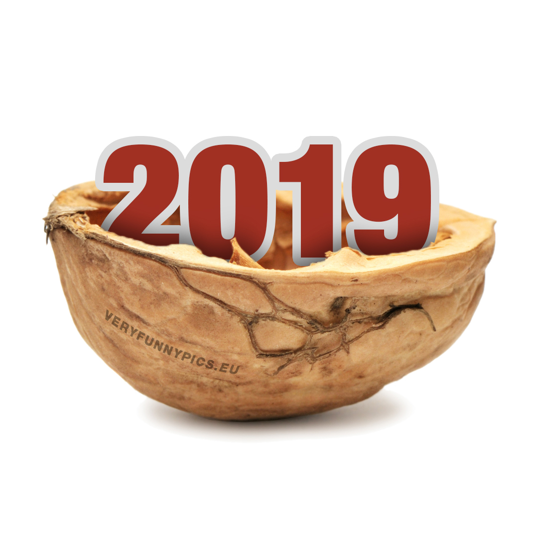 The number 2019 in a walnut
