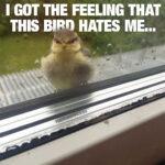 Real life Angry Bird