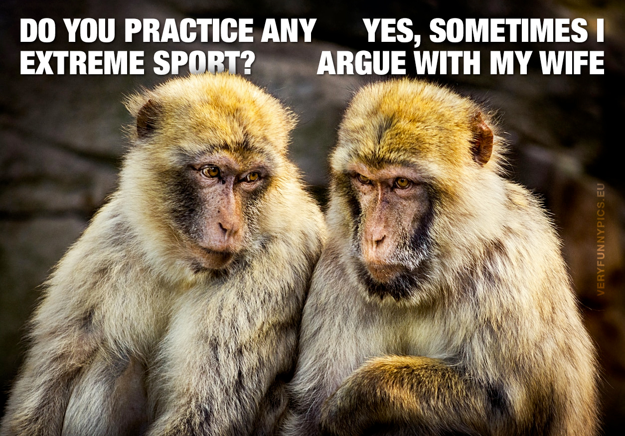 Two monkeys talking